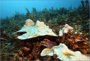 LoomisOcean